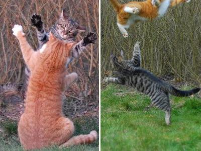 壮絶なる2匹の猫TOP