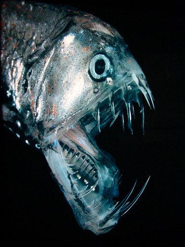 深海の生き物03