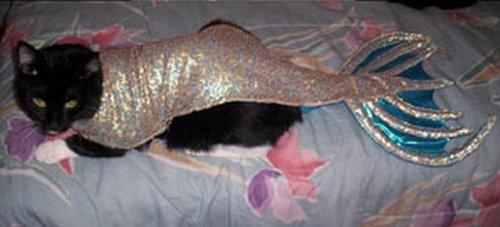 人魚猫08