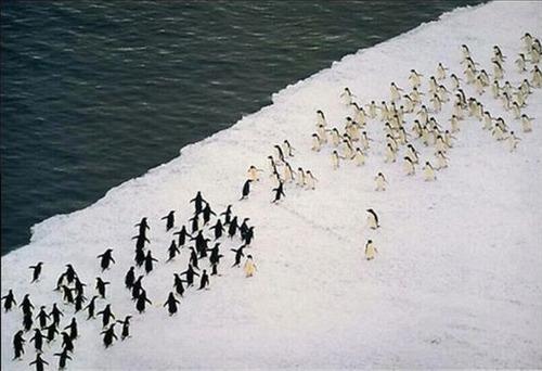 ペンギンウォーズ01