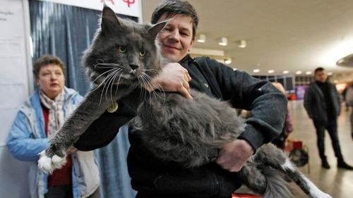 ウクライナのでっかい猫コンテスト04
