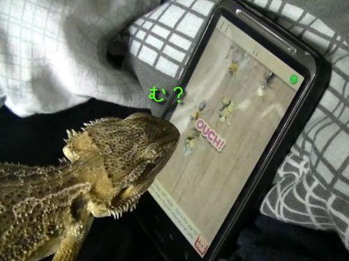 ゲームで遊ぶトカゲ