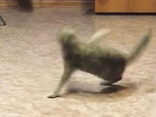 しっぽを追いかけて回転猫02