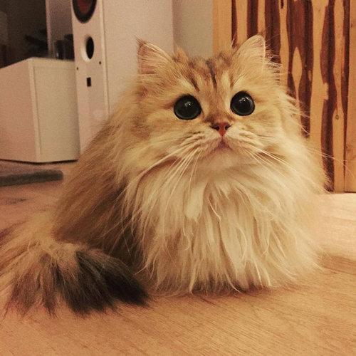 写真写りの良い猫06