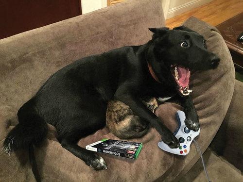 落雷から猫を守る犬03