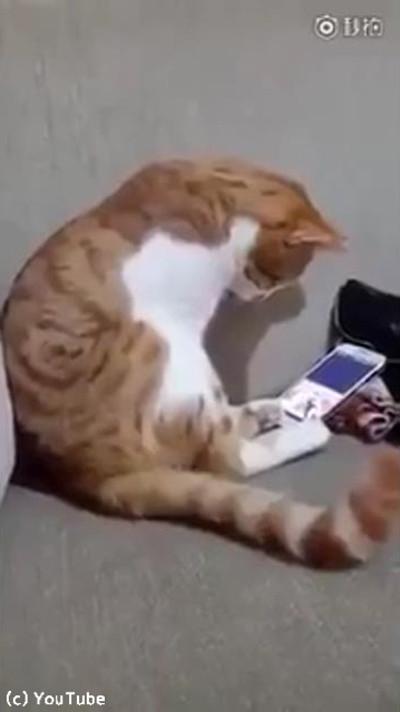 今は亡き飼い主さんの動画を見た猫がとった行動01