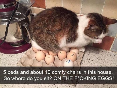 猫の座る場所01