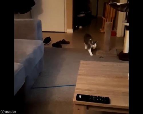 猫「バネが大好きなんです」05