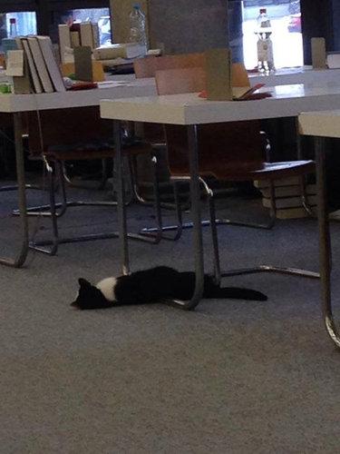 ドイツの大学で暮らす猫10