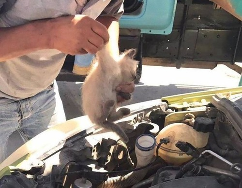 車の中にいる動物06
