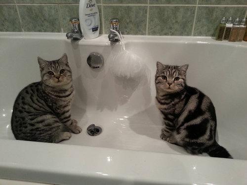 密談する猫たち14