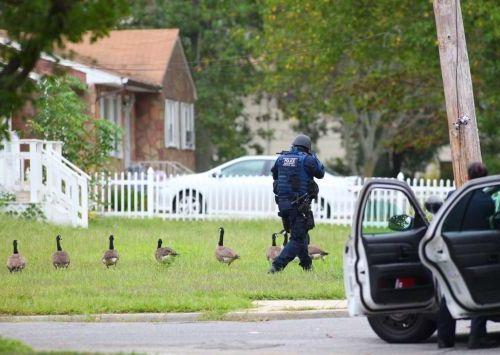 カナダの警察は犬を使わない01