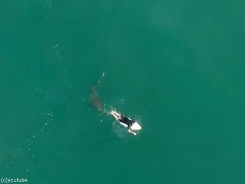 ドローンの警告でサメを回避したサーファー03
