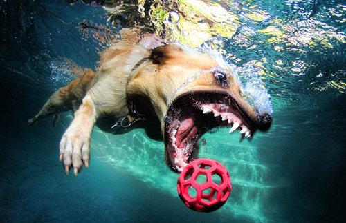 水中の犬09