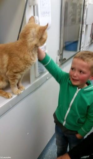 動物保護施設で行方不明の猫と再会した少年04