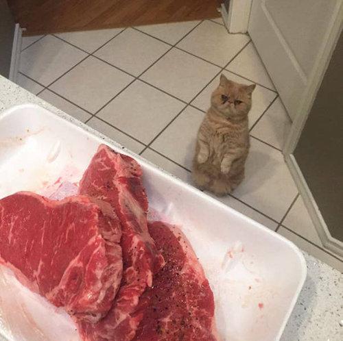 自分を人間だと思ってる猫14