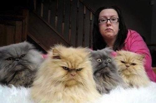 不機嫌な猫たち22