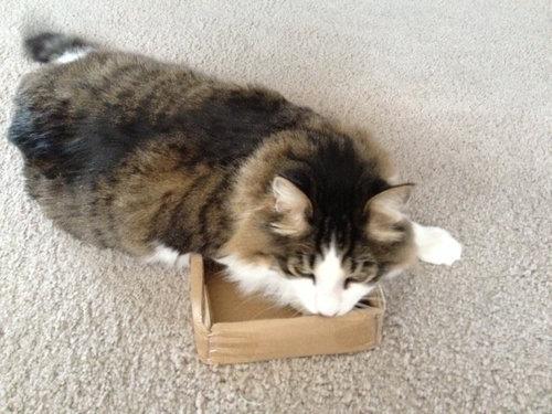 箱入り猫19