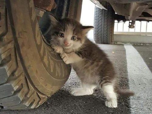 トラックの下でおびえてる子猫02