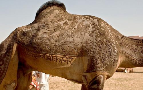 ラクダのヘアカット01