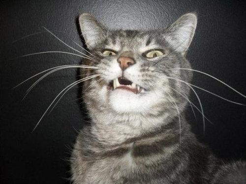 くしゃみ直前の猫01