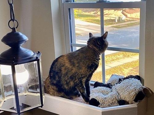 猫に窓までのブリッジ00