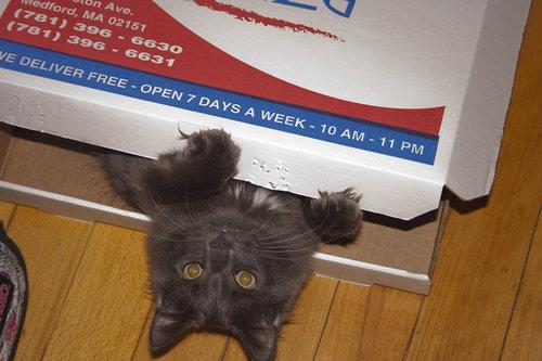ピザ猫16