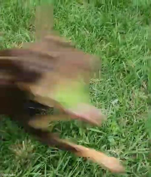 光速でボールをキャッチする犬02