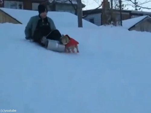 犬「これは僕のだ!」そりを奪う02