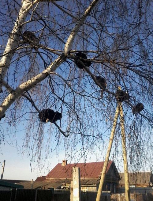 鳥のように木に止まる猫たち05