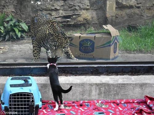 犬や猫が動物園を訪れる03