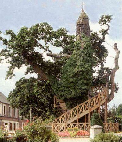 世界の奇妙な木18