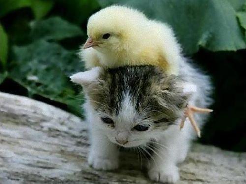 動物の友情00