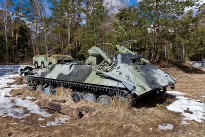 ロシアの森17