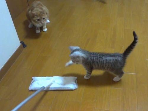 子猫がいると掃除がはかどらない01
