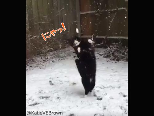 雪をキャッチするにゃんこ00