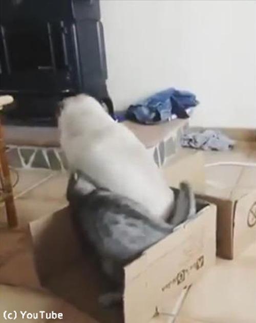 猫の言うことは絶対05