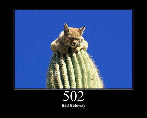 猫でHTTPステータスコード25