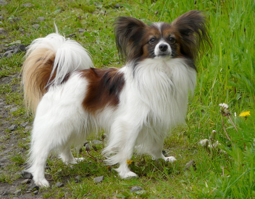 最も攻撃的な犬08