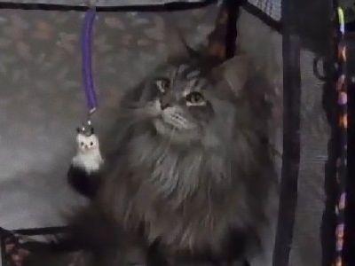 世界一長い猫00