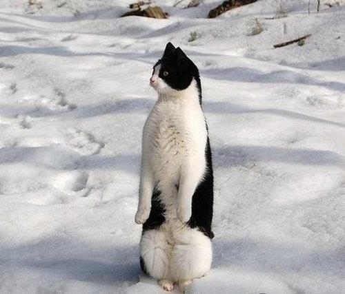 前世は別の動物だったであろう猫15