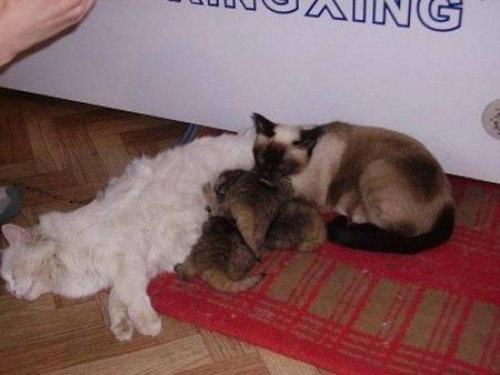 ロシアの農夫「子猫を拾ったつもりが…」01