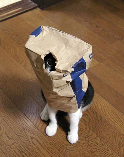 潜む猫01