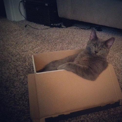うちの猫がダンボール箱を噛んだ理由02