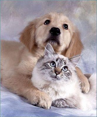 犬と猫なかよし05