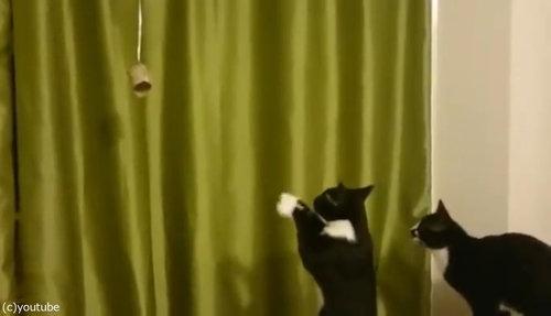 魔法を使いたい猫05