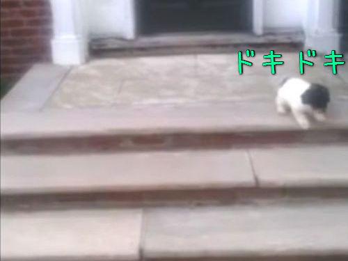階段が怖い子犬…まさかの方法00
