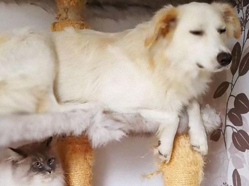 うちの犬は2匹の猫といっしょに育った02