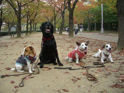 大阪城公園2007