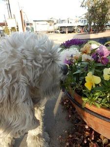 お花をクンクン